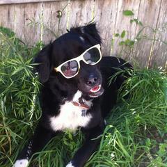 Mowgli getting some sun