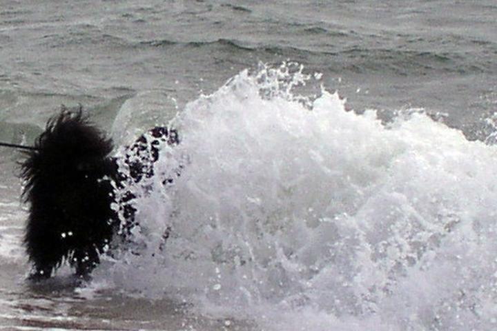 Pet Friendly Craigville Beach