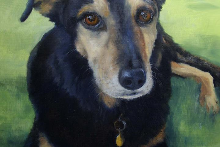 Pet Friendly Simply Dog Portraits
