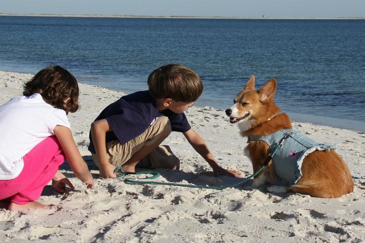 Pet Friendly Dauphin Island Beach