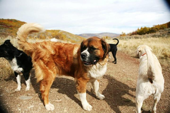 Pet Friendly Mountain Hounds