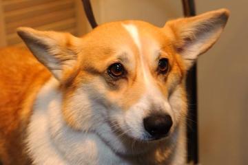 Pet Friendly Signature Paw Spa