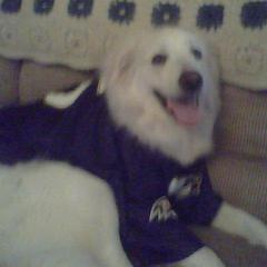 ANGEL is watching the RAVENS game.