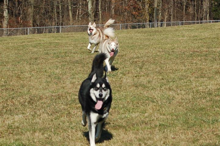 Pet Friendly Hartwood Acres County Dog Park