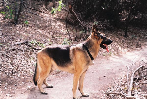 Dog Training Grand Prairie Tx