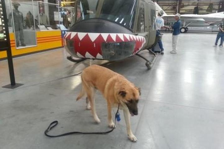 Pet Friendly Pima Air and Space Museum