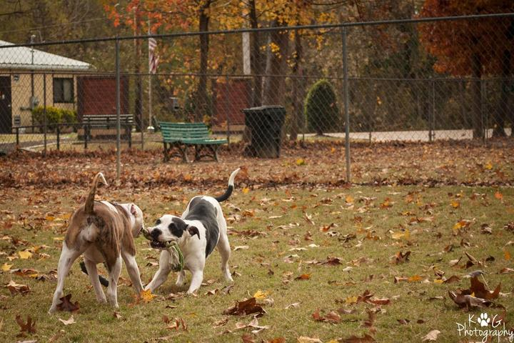 Pet Friendly Bartlett Dog Park