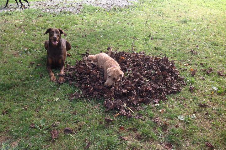 Pet Friendly Doggone Farm