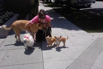 Pet Friendly Dog Walker 911