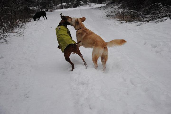 Pet Friendly Alpine Dogs
