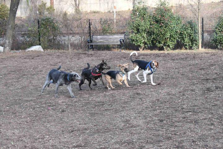 Pet Friendly Dog Run Park at Carlyle