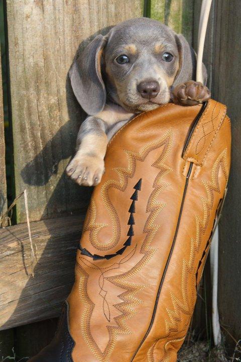 Elsie in a boot!