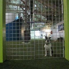 """Fido's Indoor Dog Park. Small dog in the """"all dog"""" section. Small dog area rarely used."""