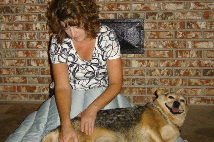 Pet Friendly Restoring Motion Canine and Equine Massage