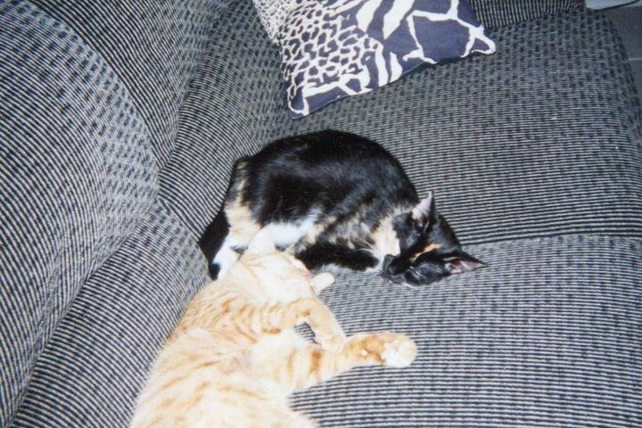 Pet Friendly Sandy Claws Pet Sitting Service, LLC