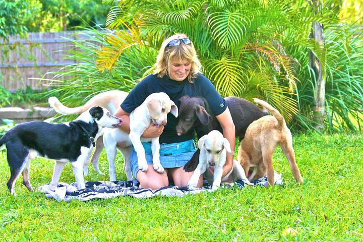 Pet Friendly All Good Dog Training And Playcare
