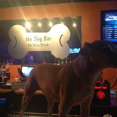 BJ@ Dog Bar
