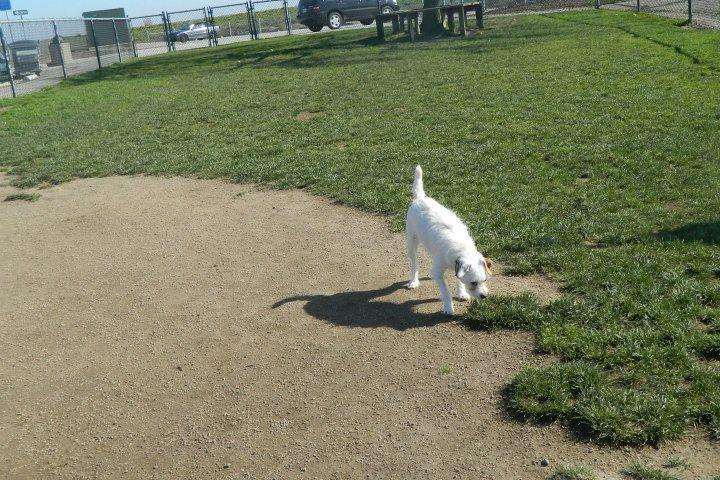 Pet Friendly Shores Dog Park