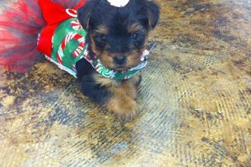 Pet Friendly Wiggles and Wags Dog Boutique and Spa