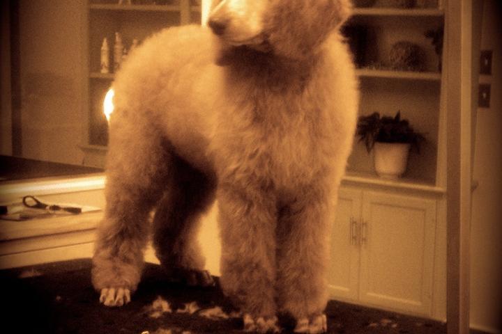 Pet Friendly The Studio Grooming Salon