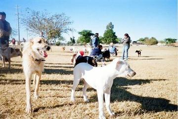 Pet Friendly Rose Mofford Sports Complex