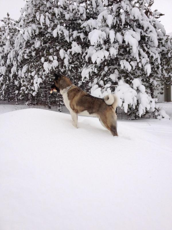 Dog Friendly Vacation Rentals Michigan