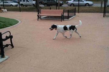 Pet Friendly Canton Dog Park