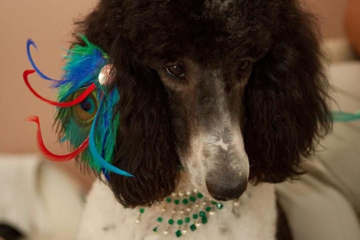 Pet Friendly PUCCI Pet Career Studios