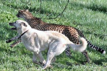 Pet Friendly Happy Tails Pet Massage