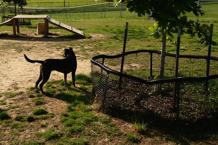 Pet Friendly Memphis Dog Park