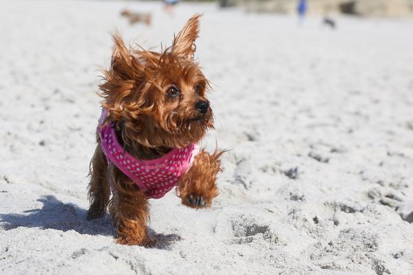 Molly on carmel beach