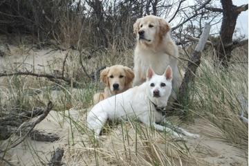 Pet Friendly Cape Henlopen State Park