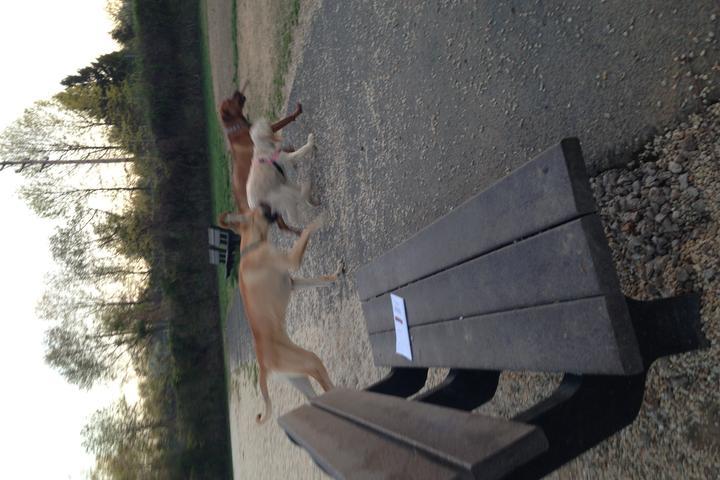Pet Friendly Bow Wow Park