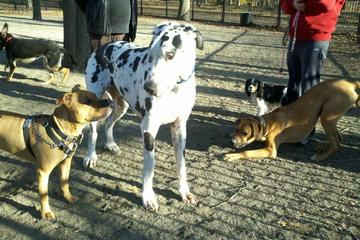 Pet Friendly Ridgewood Bark Park