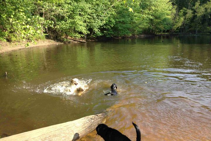Pet Friendly Timber Creek Pooch Park