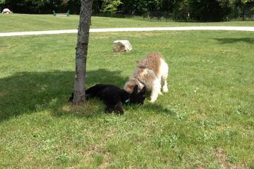 Pet Friendly Fairmont Dog Park