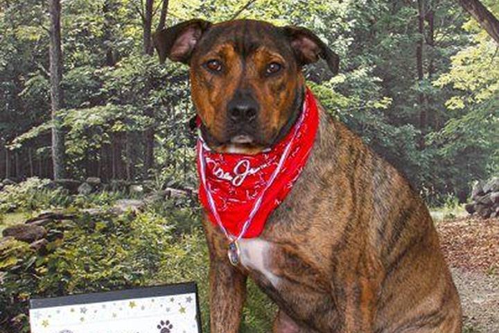 Pet Friendly Chris' Canine Connection