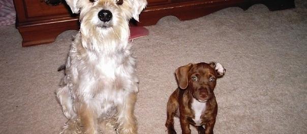 Dog Friendly Bloomington, IL - Bring Fido