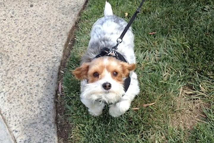 Pet Friendly Deluxe Dog Concierge