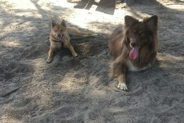 Pet Friendly Daphne Dog Park