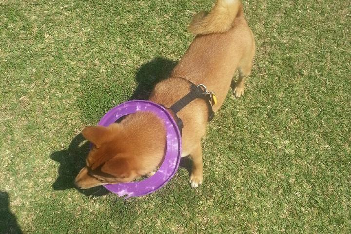 Dog Owner's Guide to Daphne, AL
