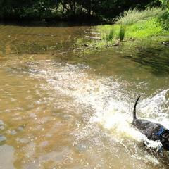 Reedy Creek Ponds