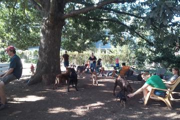 Pet Friendly ParkGrounds