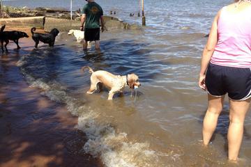 Pet Friendly Downs Memorial Park Dog Beach