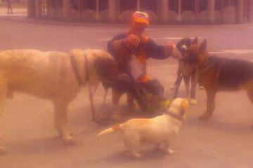 Pet Friendly Dog Walkers Galicia