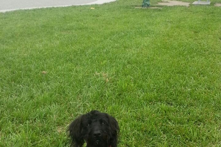 Pet Friendly Mills River Dog Park