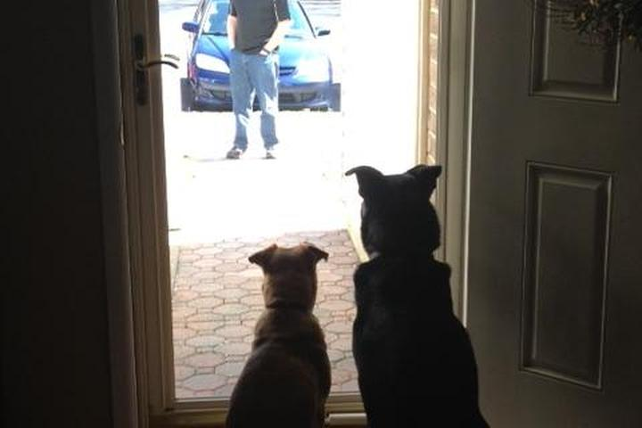Pet Friendly Big Brother & Little Sister Pet Services