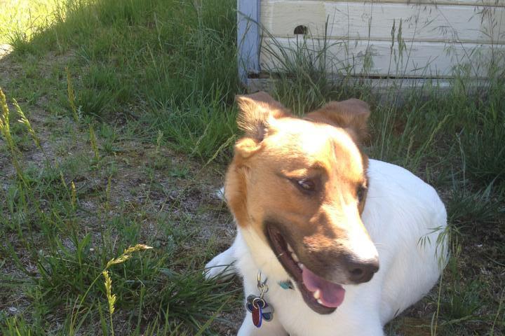 Pet Friendly Lilac City Dog Walking & Care