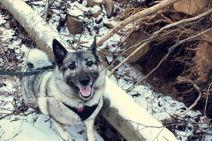 Pet Friendly Sourland Mountain Trails