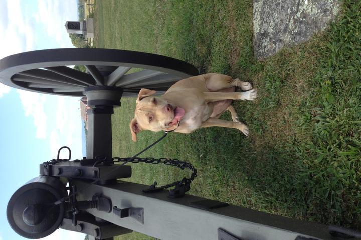 Dog Friendly Hiking Trails in Pennsylvania - Bring Fido